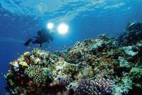 scuba divers