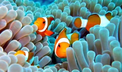 Dive Shops in Negros Oriental - Apo Island