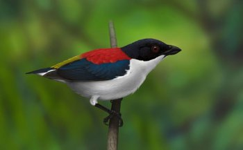 Birdwatching - Cebu Flowerpecker
