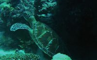 Dive in Romblon Philippines