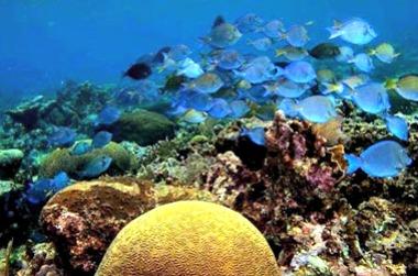 Legazpi Advances to Nautical Tourism With its Exotic Dive Destinations