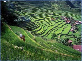 Ifugao Rice Terraces in the Philippines