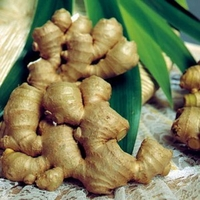 Natural Herbal Remedies - Ginger Root