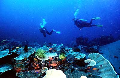 Philippines diving