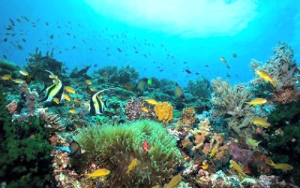 Artificial Reefs Revive Marine Life in Southern Leyte
