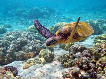 Stella Maris Fish Sanctuary: Endeared by Sea Turtles in Oriental Mindoro