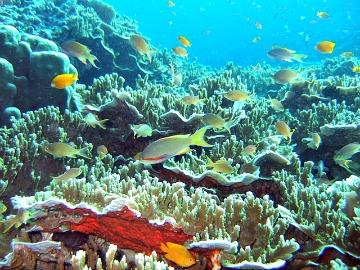 Underwater International Photographers to Converge in Sogod Bay