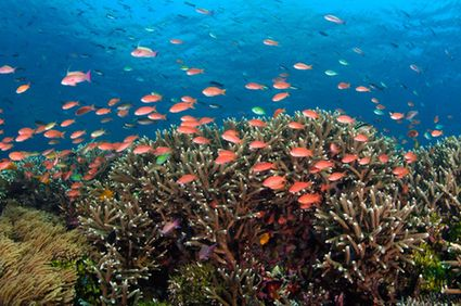world ocean conference - coral triangle