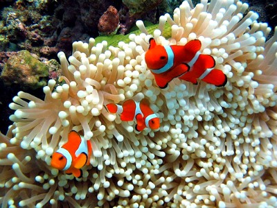 Anilao Dive Spots Captivate Tourists and Divers