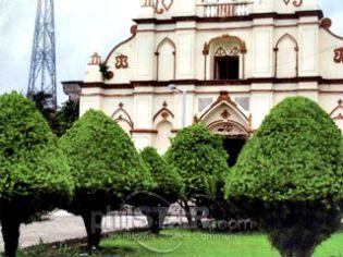 The Mighty Arius Tree