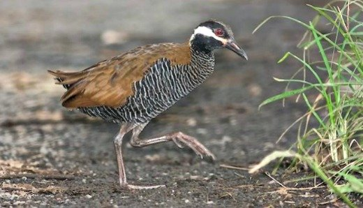 Birds of the Philippines Highlight Cagayan's 3rd National Eco-tourism Fest