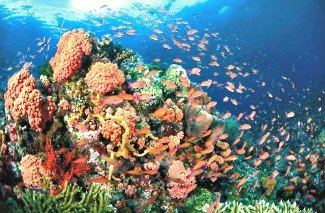 Coral Reefs in Albay Gulf Come Back to Life