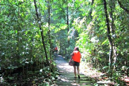 Jungle Trail to Underground River Opens Again in Puerto Princesa