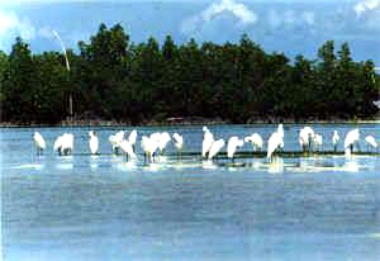 Lapu-Lapu City Opens Another Eco-Tourism Attraction