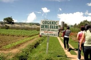 Sustainable Eco Tourism Organic Farms