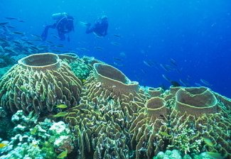 Tubbataha Reef - Scuba Diving Travel