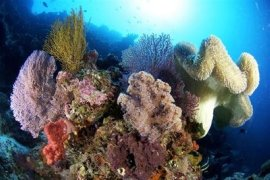 Top Scuba Diving Trips - Philippines