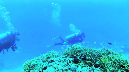 Davao Oriental's 'The Wall,' Among World's Best Dive Spots